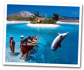what water activities dolphin encounters